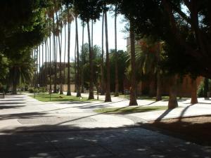Arizona State U palm tree walkway