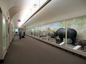 Morrill_Hall_(first_floor_hallway),_University_of_Nebraska-Lincoln,_Lincoln,_Nebraska,_USA